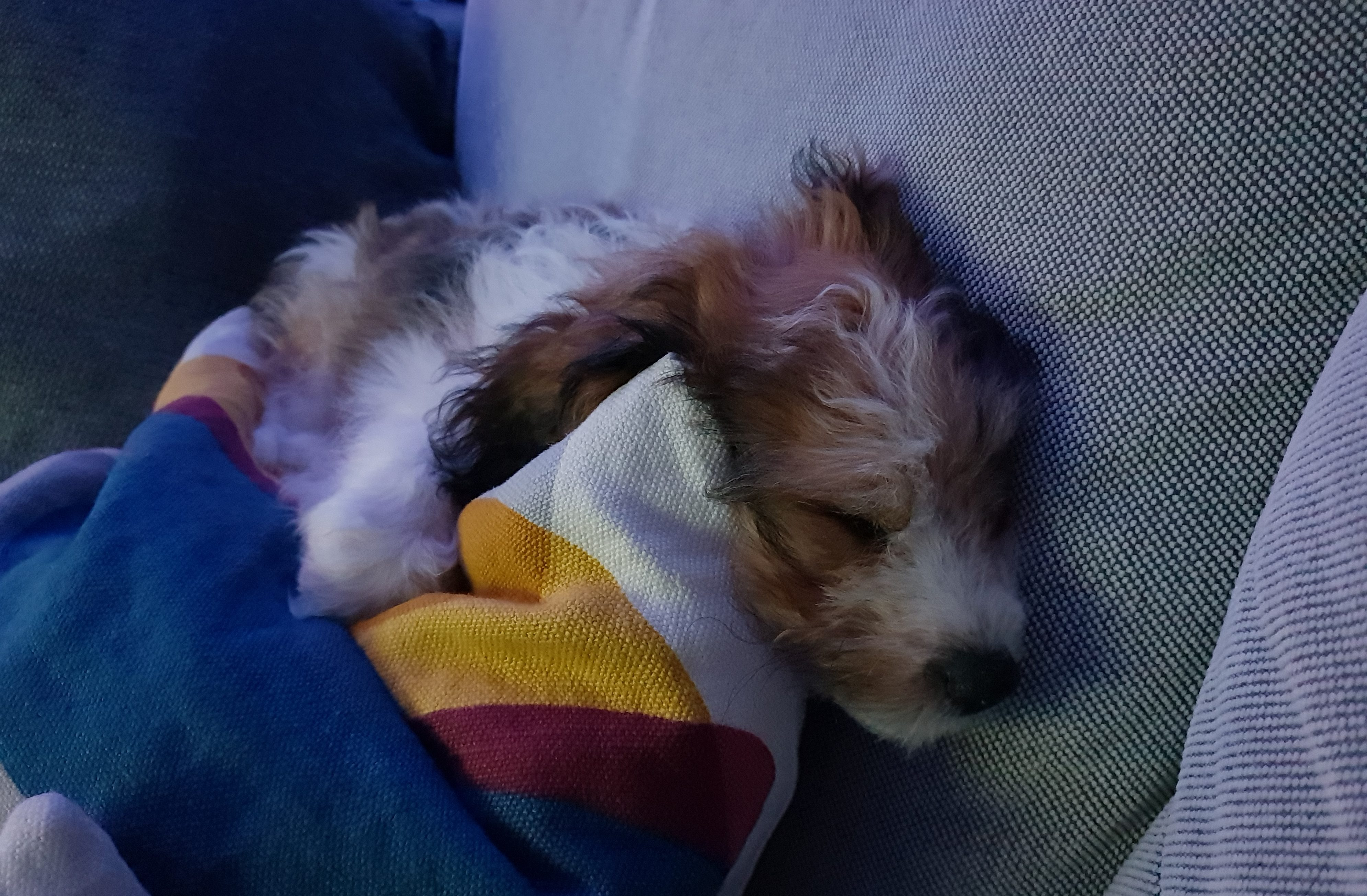 I think Duggee the puppy is settled..